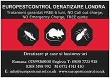 Servicii deratizare non stop free Londra E7