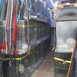 Transport catei si pisici legal din RO catre UK