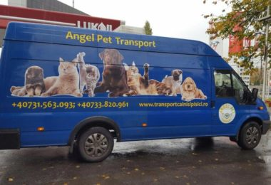 Transport autorizat de CAINI SI PISICI Romania-Londra LUNAR!